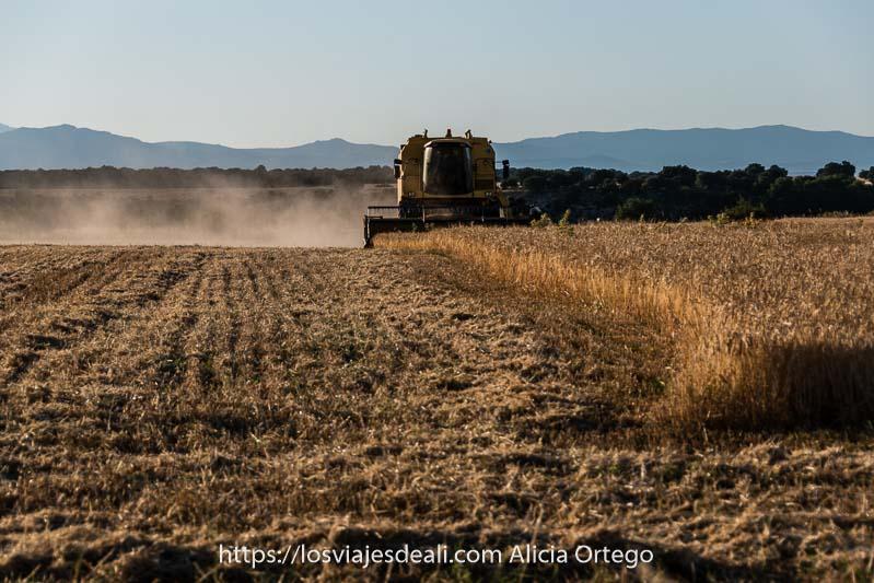 cosechadora trabajando en campo de cereal al atardecer