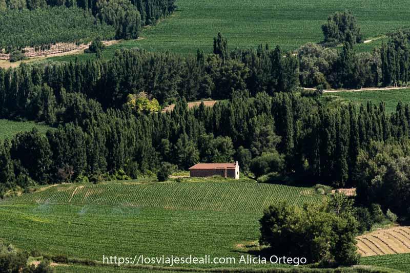 fotos del verano: paisaje de campos de verdes y filas de árboles con una ermita en el centro