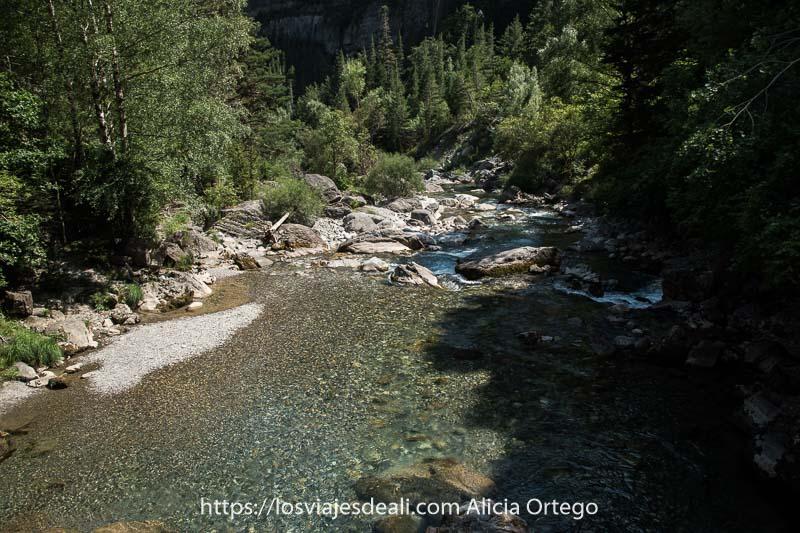 río Ara de aguas cristalinas bajando por el Valle de Bujaruelo entre pinos