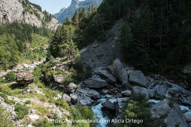 río Ara bajando entre grandes rocas y pendientes con pinos en el Valle de Bujaruelo