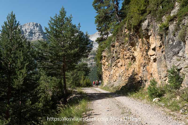 pista de la ruta de Espierba con pinos a un lado y los picos al fondo
