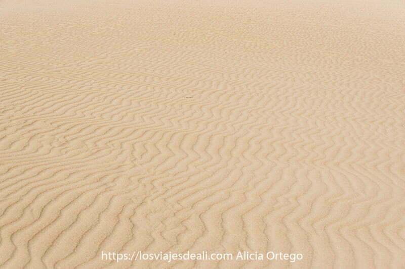 arena dibujando líneas discontinuas en las dunas de corralejo en fuerteventura