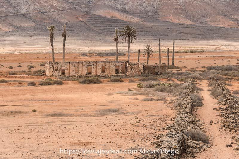 ruinas de una casa con varias palmeras y un camino marcado con piedras volcánicas en paisaje de colores anaranjados en Fuerteventura