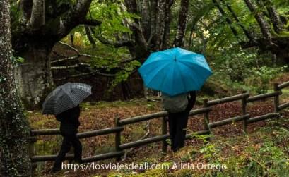 dos personas con paraguas abiertos caminan entre hayas en el parque natural de gorbeia