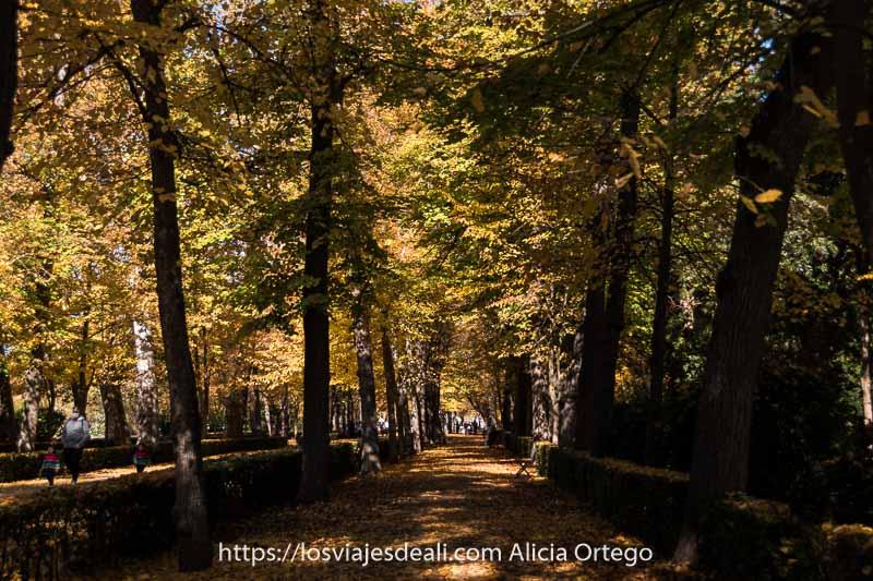 paseo del jardín del príncipe con árboles con hojas amarillas y naranjas