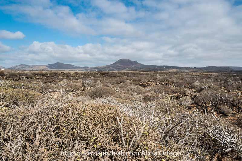 paisaje de lanzarote con arbustos típicos y volcanes al fondo