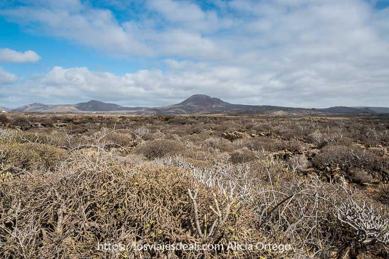 paisaje de tabaibas con el volcán corona al fondo