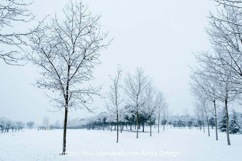 parque con árboles sin hojas y todo lleno de nieve en madrid