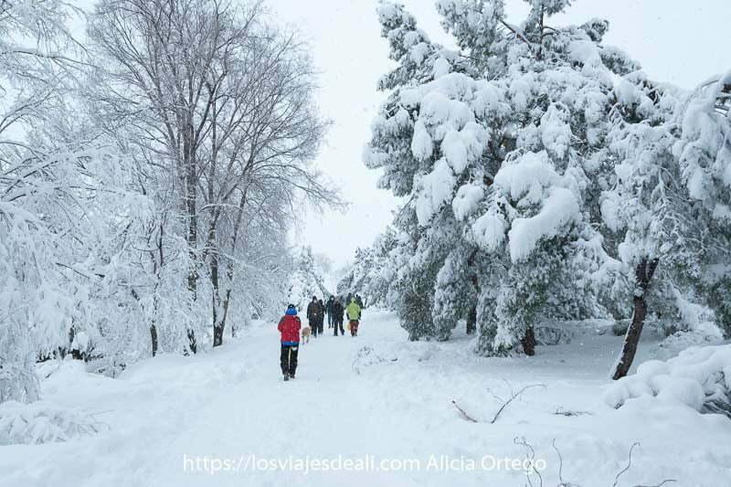 gente andando entre árboles llenos de nieve