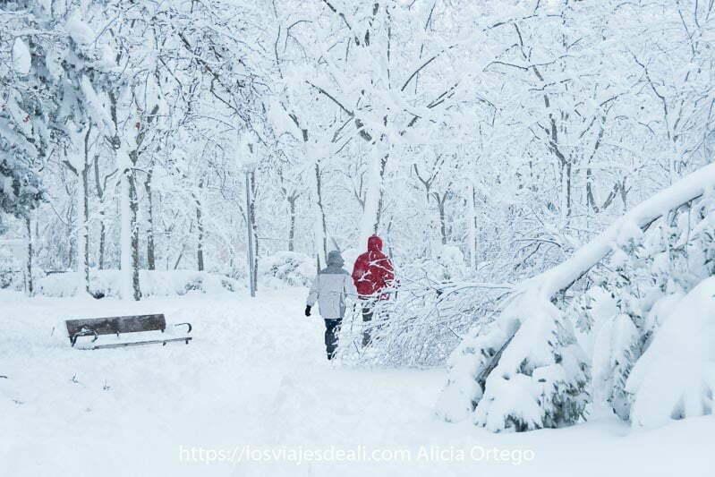 dos personas andando en el parque entre árboles llenísimos de nieve y ramas caídas