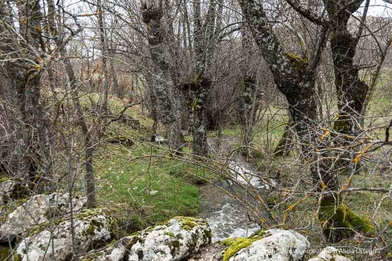 riachuelo entre árboles con ramas desnudas y musgo