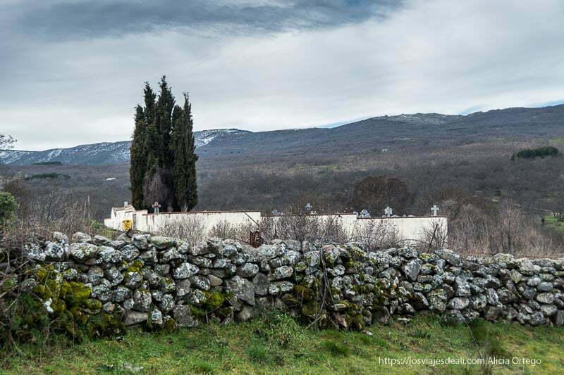 cementerio con grupo de cipreses en medio del campo y la sierra al fondo con nubes grises