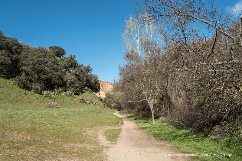 camino con árboles enmarañados a la derecha y al fondo cortados de arenisca en la ruta a la Cascada del Hervidero