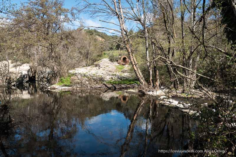 reflejos en un pequeño lago natural con troncos de abedul curvados