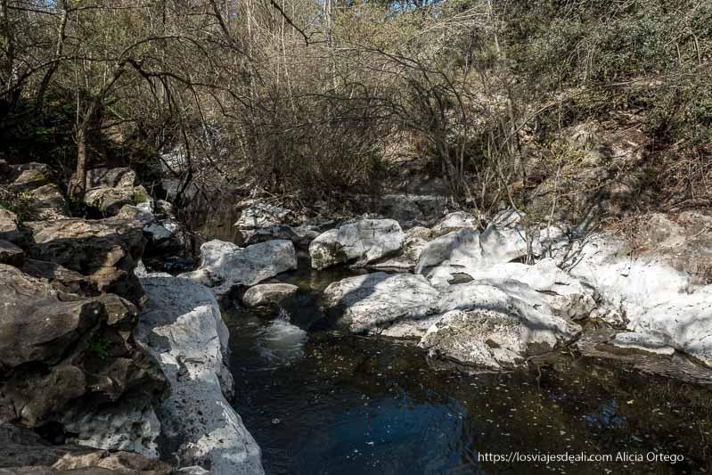 río guadalix discurriendo entre piedras de color blanquecino y con árboles alrededor