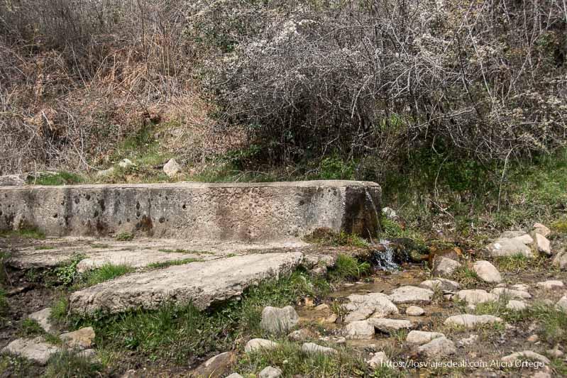 pilón de agua de cemento y alargado para el ganado