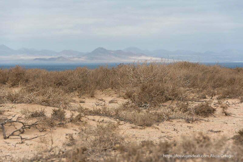 matorrales de tabaiba secos y al fondo costa de Lanzarote llena de volcanes