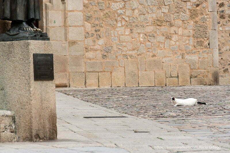 gato en actitud de caza en una plaza del caso antiguo de cáceres