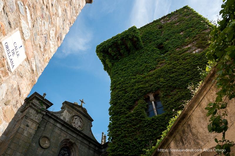 torre gótica de sande cubierta totalmente con hiedra verde incluido balcón de piedra