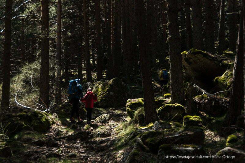 mis amigos andando por camino de rocas entre pinos con luz del sol entrando entre los troncos