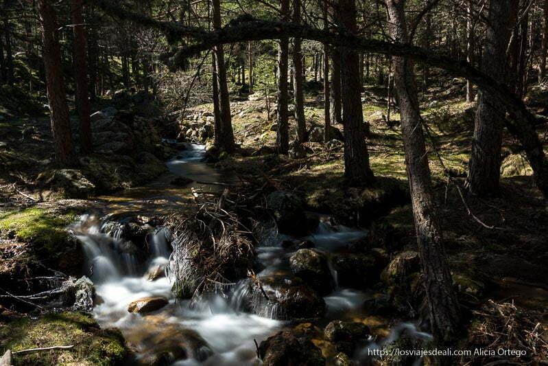 arroyo cayendo entre rocas llenas de musgo y ramas de pino dando sombra