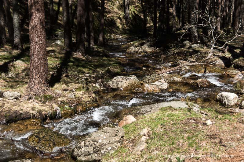 arroyo entre rocas y pinos