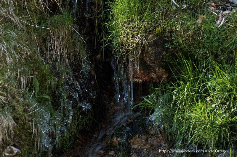 chorlitos de hielo entre hierba y rocas en el puerto de navafría