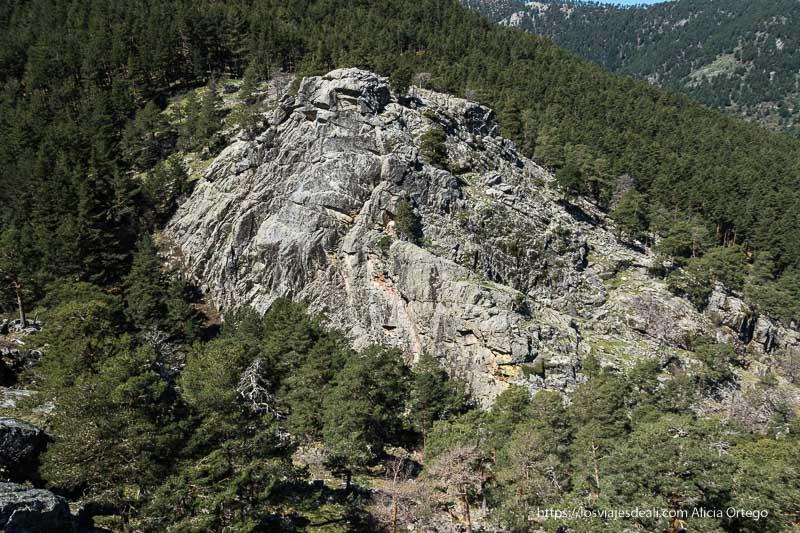 vista del cortado de roca entre pinares cerca del puerto de navafría