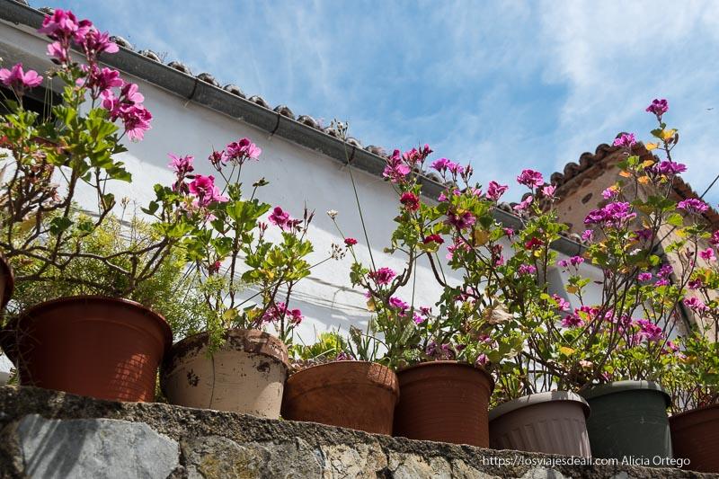 macetas con flores rosas y cielo con nubes blancas