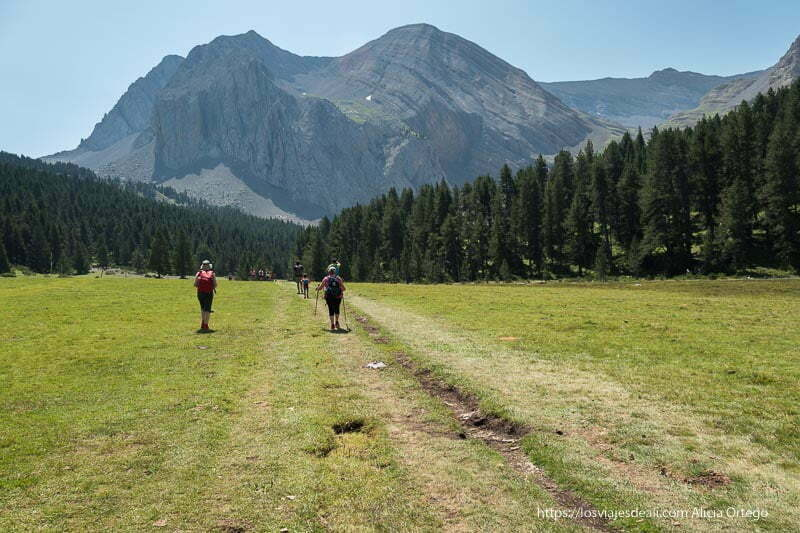 caminando por el prado antes de llegar al ibon con bosque de pinos y la montaña sobre ellos