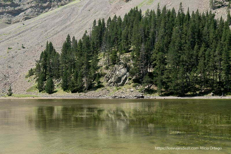 ibon de plan con pinos reflejándose en el agua verdosa