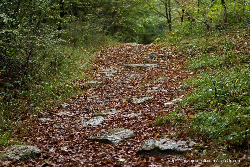 sendero con piedras, hojas rojizas y helechos en los lados