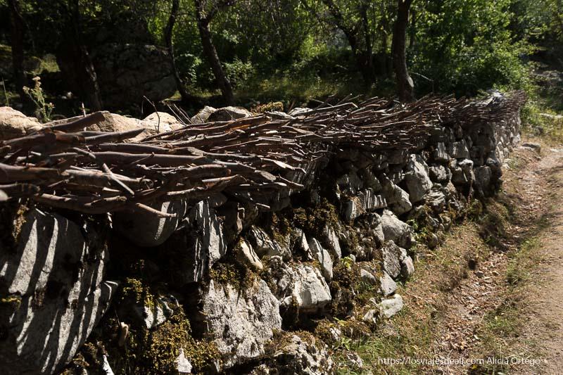 muro de piedras de 1,5 metros de alto con ramas de árbol en la parte superior a modo de pinchos