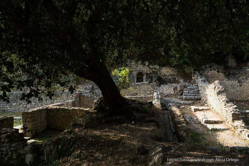 gran árbol creciendo entre estructuras de edificios antiguos de la zona del mercado