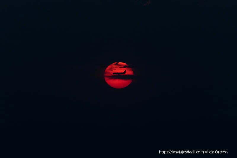 avión cruzando el sol rojo al atardecer como si se posara
