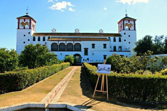 Experiencia de oleoturismo - Visitar una almazara en Sevilla