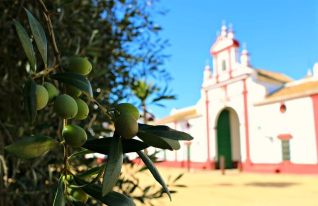 Visitar una almazara en Sevilla - La Hacienda Guzmán
