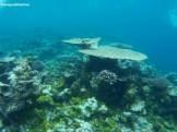 Segundo arrecife