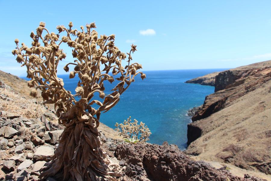 Punta San Lorenzo .Madeira