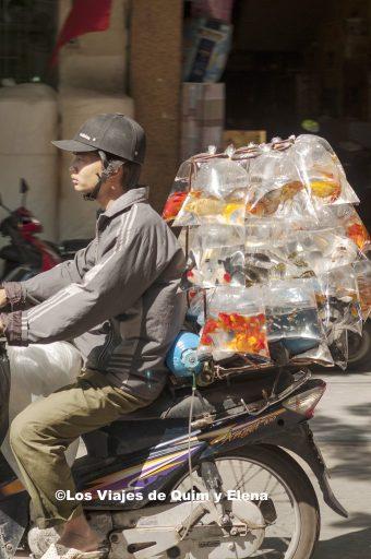 También se pueden transportar peces