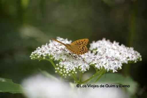 Mariposa en el volcán de Santa Margarida