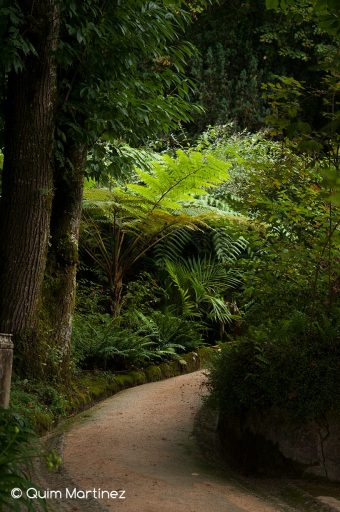 Exuberancia en Quinta da regaleira