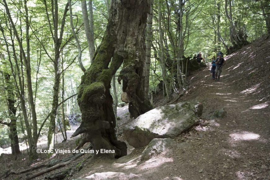 Los árboles tienen formas curiosas