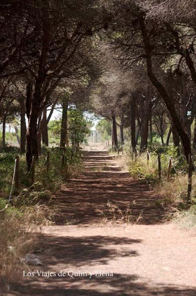 Pineda de Can Camins en El Prat