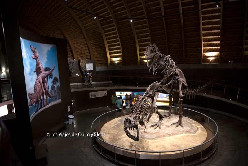 Dos Rex en el interior del museo de los dinosaurios