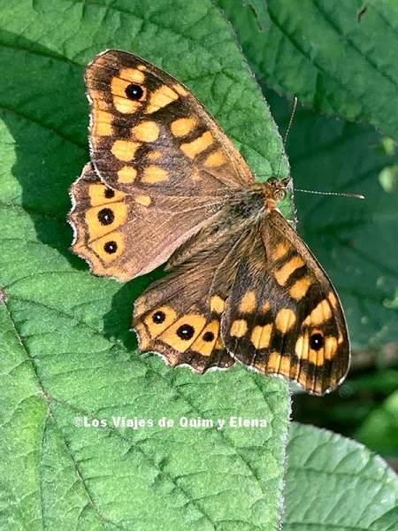 Una mariposa perdida en el laberinto