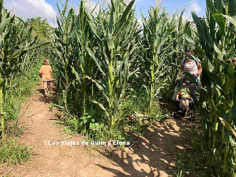 Buscando la salida del laberinto de maíz