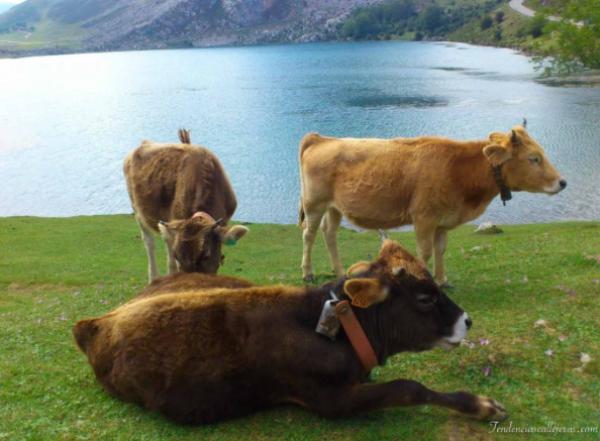 tour por Asturias