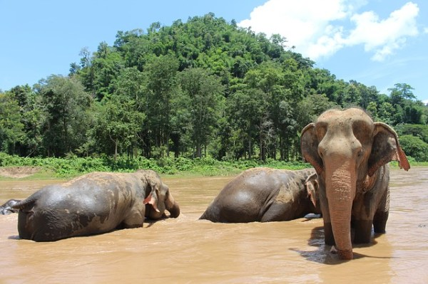 Que ver en Chiang Rai y Chian Mai