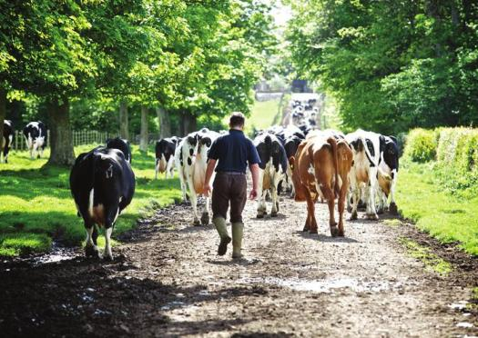 RSABI and NFU Scotland joint Yester farm visit